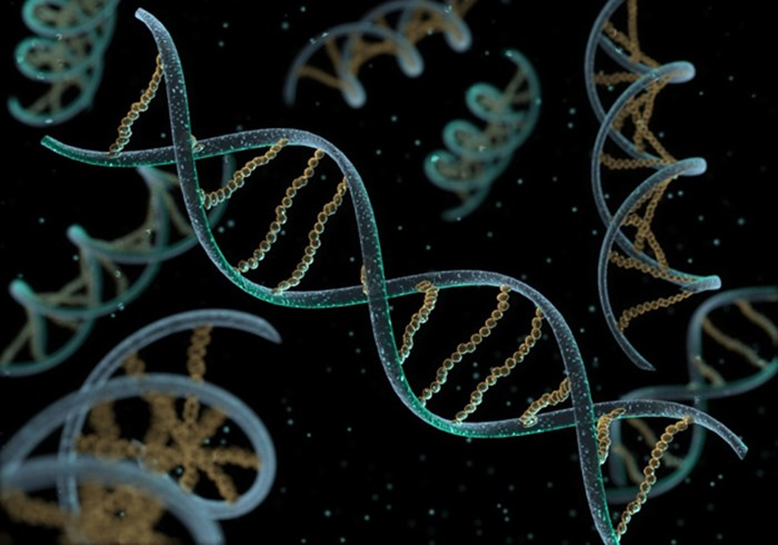 Did Scientists Really Discover the 'Gene That Makes Us Human'?