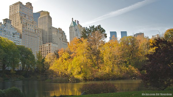 Why Every City Needs a Central Park