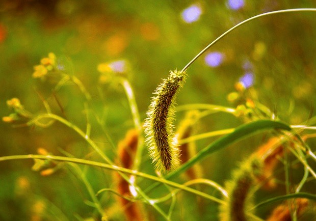 Subversive Kingdom: The Parable of the Wheat and the Weeds