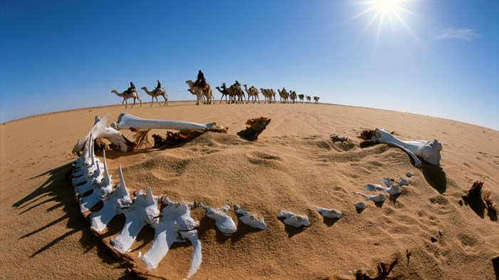 The Latest Challenge to the Bible's Accuracy: Abraham's Anachronistic Camels?