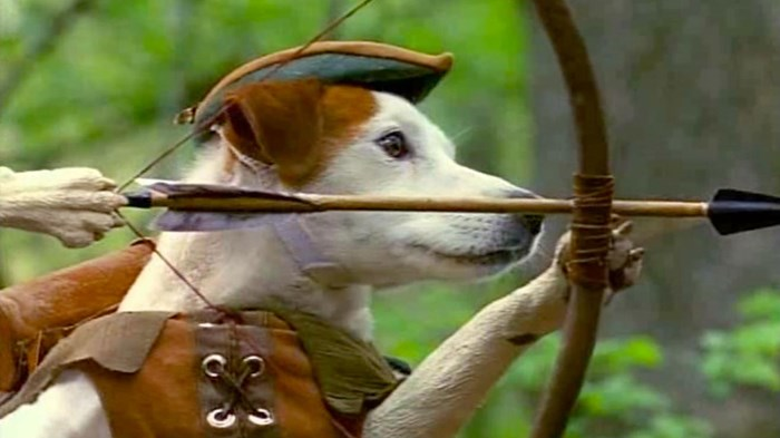 What I Learned About Movies from a Well-Read Dog