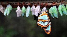Are Butterflies a New Creation After All?