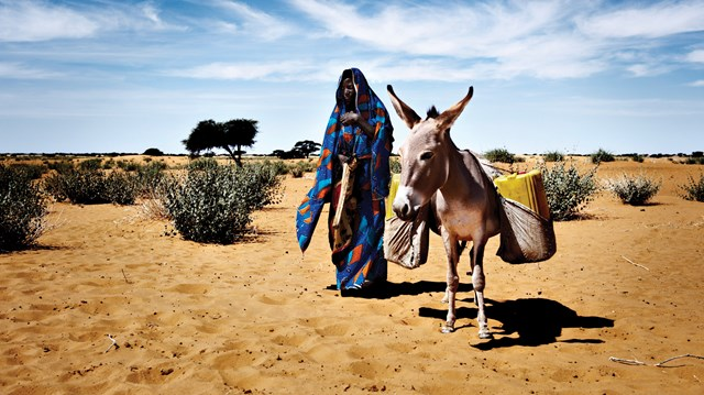 Pushing Back the Desert: Niger's Christians Get Creative for Daily Bread