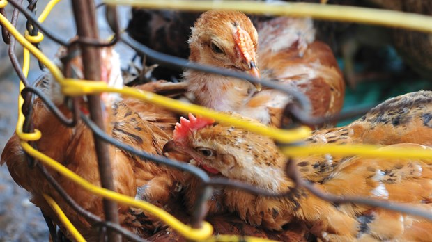 The Grim Realities of Factory Farms