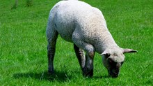 Church Growth: Feeding the Flock In a Count-the-Sheep Culture