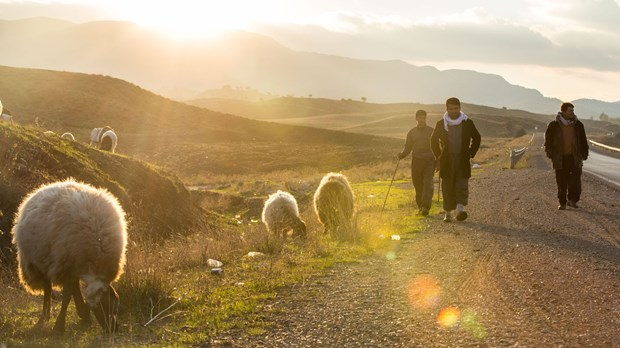 Shepherds on the road to Sulaymaniyah.