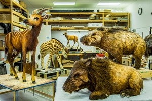Animal models that represent that types of creatures that may have been on Noah's Ark.