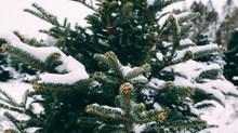 Christmas Shame