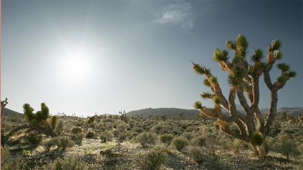 Lessons from the Joshua Tree