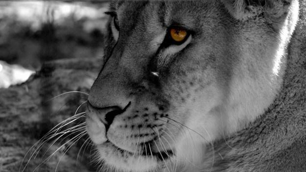 Lions vs. Christians