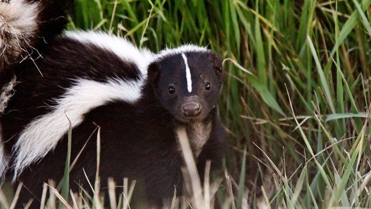 The Day I Brought a Skunk to Church