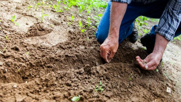 Three Keys to Increasing Church Planting Capacity in Denominations