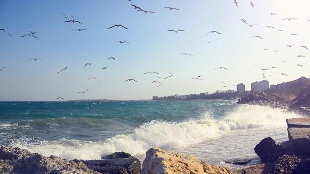 Amazing Little Bird Follows God-Given Homing Signal