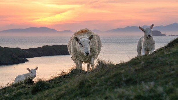 Remote Town Uses Sheep to Generate Google Street View Images