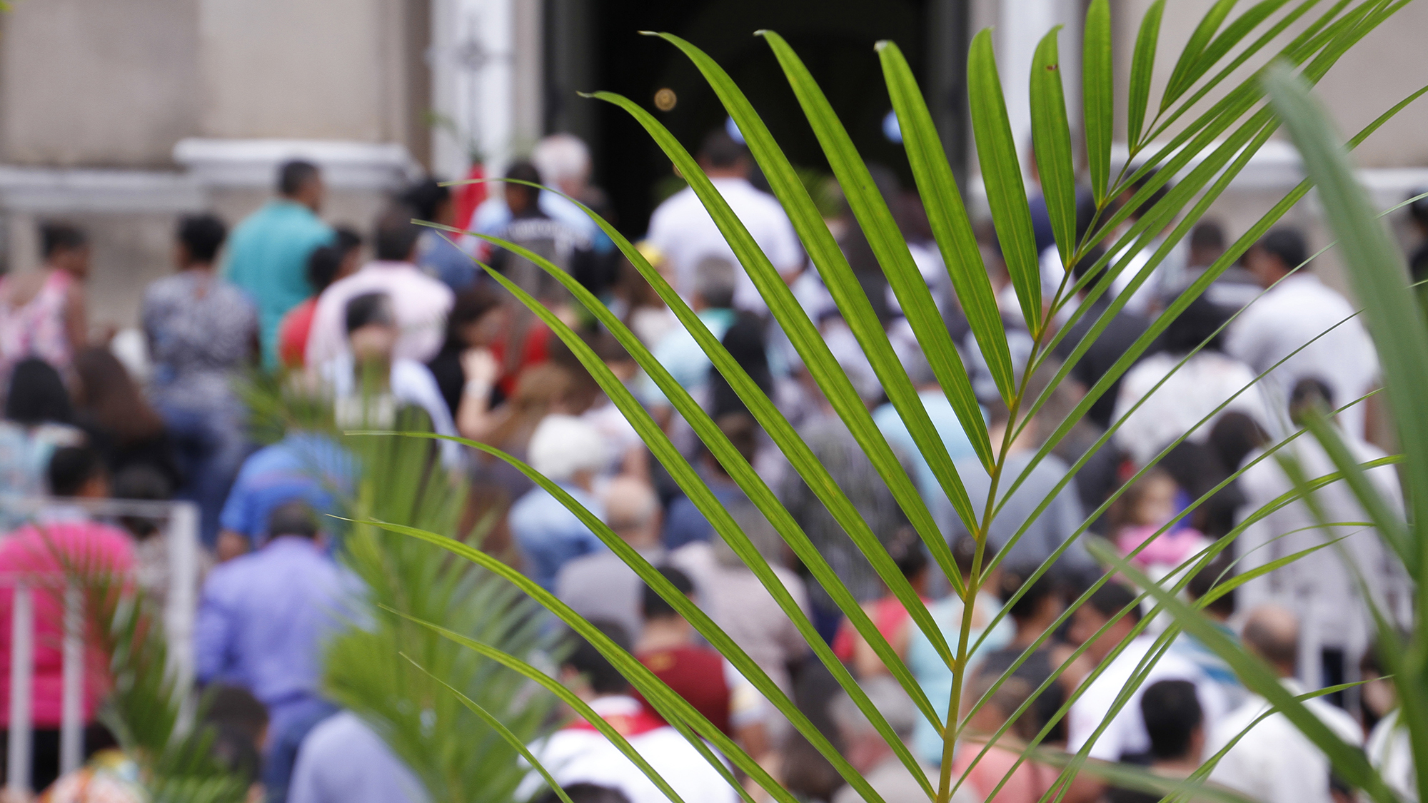 Stephen Catholic Church celebrates Palm Sunday