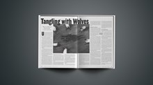 Tangling with Wolves