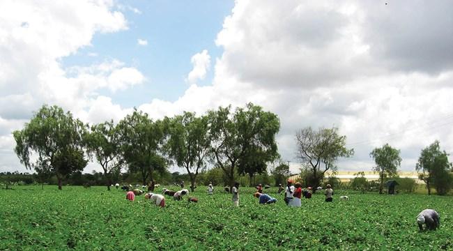 Uma fazenda MCF