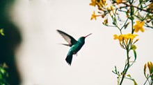 What the Hummingbird Shows Us About God's Handiwork