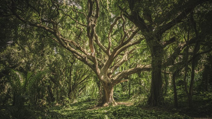 What Trees Teach Us about Community and Crisis