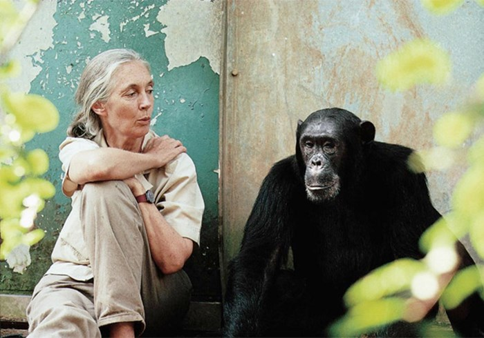 Interview: Why Jane Goodall Thinks Chimps May Have Souls