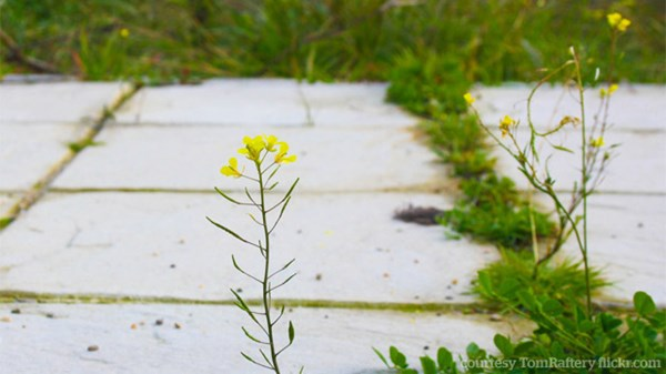 Bloom Where You Are Planted: Why We Chose Public School