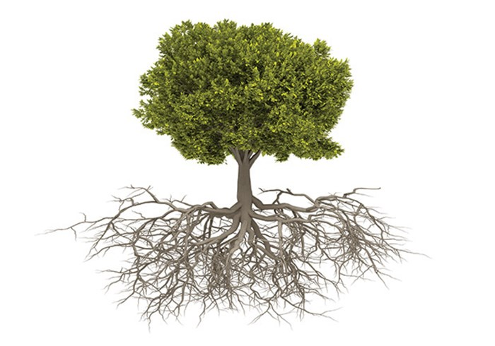 Planting Deep Roots
