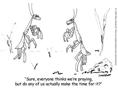 Praying Mantis Has no Time