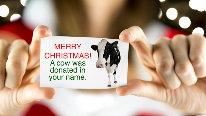 Should I Give a Cow or Cash for Christmas?