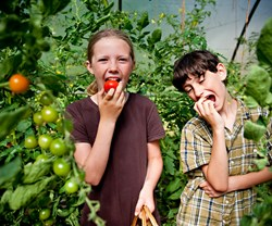Leah's daughter, Maya, and her friend Isaac enjoy eating tomatoes straight from the vine.