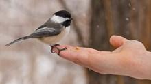 Want a Better Devotional Life? Buy a Bird Feeder
