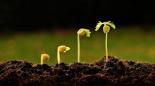 Growing Into Life