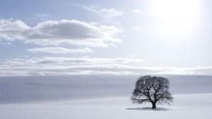 Advent's Knotty Family Tree