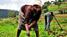 Microfinance Is a Women's Issue