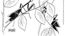 Praying Mantis Has no Desire