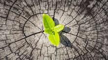 Revitalizing Denominations Through Church Planting