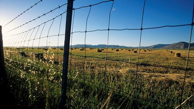 Breaking Down Fences
