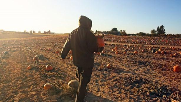 Farmer Uses Mold to Make 'Pumpkinsteins'