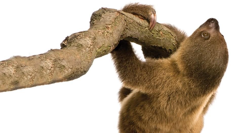 Hardworking Sloths: Disguising Spiritual Laziness