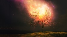 Moses, a Burning Bush, and Your Calling