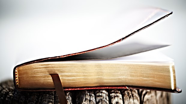 3 Lies We Believe About the Bible