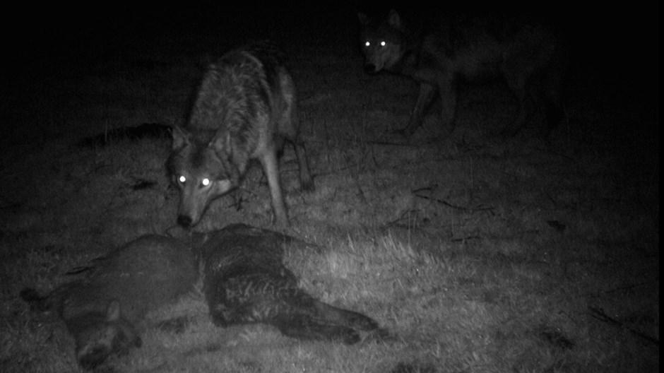 Cuídese de los lobos de los préstamos rápidos de día de pago