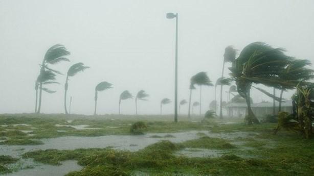 Professor Loses Manuscript in Hurricane