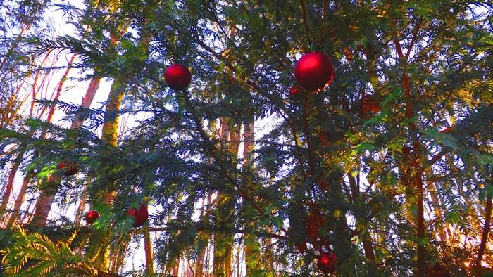 o christmas tree - Christmas Tree History