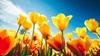 Joy in Easter Week