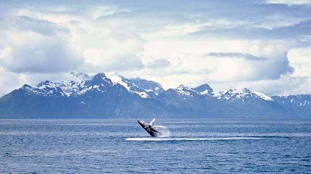 Whales: Mysteries of God's Creation