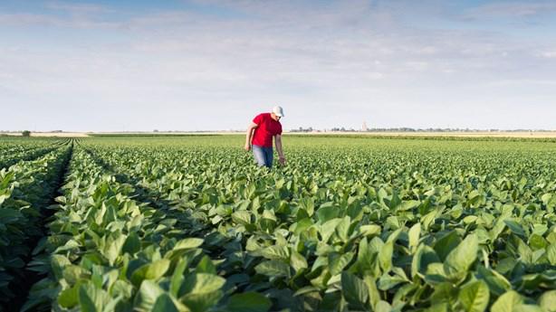 Farmer Offers Forgiveness and a Job to Thief