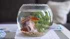 Belgian Hotel Rents Fish to Lonely Guests