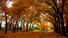 How We're Encouraging Chicago Church Planters This Fall