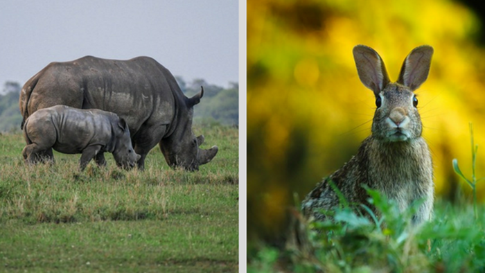 Rhinos, Rabbits, and the Challenges of Multiplying a Church Planting Movement