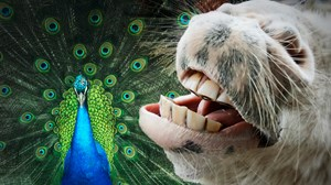 Demonic Cheese-Donkeys and Immortal Peacocks: Augustine Does Science